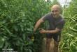 Botoš - Darko Velisavljev nekadašnji šampiuon u rvanju uspešan kao trener i proizvođač paradajza foto B.Grujić